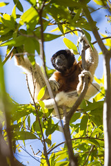 LEMUR-PARK-19 (RAFFI YOUREDJIAN PHOTOGRAPHY) Tags: park city travel trees plants baby white cute green animal fauna canon river jumping sweet turtle wildlife bricks mother adorable adventure explore lemur 5d lemurs bushes madagascar 70200 antananarivo mkiii
