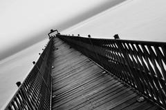 The Path... (faisy5c) Tags: bridge blackandwhite monochrome beautiful blackwhite nikon path kuwait totalphoto d7100 5ccha faisy5c nikond7100