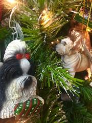 "Christmas Is Coming! (EDWW day_dae (esteemedhelga)™) Tags: merrifieldgardencenter holiday christmas ornaments holidaydecornativity cheer holidayseason happyholidays seasongreetings merrychristmas stockings christmastrees wreath snowflakes santa santaclaus st nicholas snow globe snowman reindeer jolly angels ""northpole"" ""sleighride"" holly ""christchild"" bells ""artificialtree"" carolers caroling ""candycane"" ""gingerbread"" garland elf elves evergreen ""feliznavidad""frostythesnowman"" ""giftgiving"" goodwill icicle ""jesus"" ""joyeuxnoel"" kriskringle"" manger mistletoe nutcracker partridge poinsettia rejoice scrooge ""sleighbells"" ""stockingstuffer"" tinsel ""wisemen"" ""wrappingpaper"" yule yuletide festive bethlehem ""hohoho"" illuminations ""twelvedaysofchristmas"" ""winterwonderland"" xmas bauble esteemedhelga edww daydae merrifield gardening center"