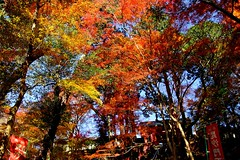 (nobuflickr) Tags: nature japan kyoto autumncolors      bisyamondotemple  20151205dsc03634