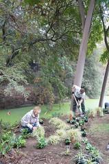 Trueblood Memorial Planting in the East Asian Collection (UC Davis Arboretum & Public Garden) Tags: family asian memorial arboretum east collection uc davis planting trueblood