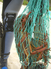 Hummer im Netz lobster