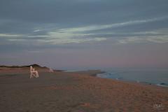 Cape Coast (PNG441) Tags: capecod massachusetts atlanticocean coast massachusettscoast coastline