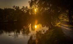 sunset (phlickrron) Tags: sunset sun regen river nature path outdoor duck golden tree