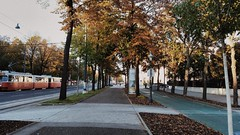 IMG_20161021_163216 (Lets go hand in hand.) Tags: autumn fall trees streets street park nature city wien vienna austria sterreich europe travel photography