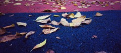 Project 365 #Day 290 (komanche) Tags: day leaves fulles hojas fall autumm reus baixcamp phonephotography cameraphone lgg4 365project 290