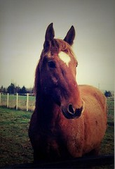 VaG (c'FAURE) Tags: cheval horse libert life love lomo