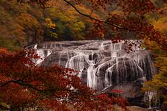 Autumn in Fukuroda falls (t.kunikuni) Tags: jp 茨城 茨城県 いばらき イバラキ 久慈郡 久慈 くじ クジ 大子町 大子 だいご ダイゴ 袋田の滝 ふくろだのたき フクロダノタキ 滝 秋 ibaraki ibarakiken kuji kujigun daigo daigomachi fukurodafalls fukurodanotaki fall waterfall autumn