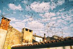 departures (a-lis-e) Tags: departures partenze home migration birds ferrara roofs