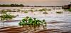 Mekong (David Ruiz Luna) Tags: vietnam14 mekong riomekong river transboundary transfronterizo rio southeastasia sudesteasiático asia deltadelriomekong mekongdelta mekongriver thịxãvĩnhlong vinhlong vietnam southasia indochinapeninsula tourist touring tourism touraroundtheworld viaje trip turismo agua water