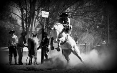 Em meio  poeira (Eduardo Amorim) Tags: gacho gachos gaucho gauchos cavalos caballos horses chevaux cavalli pferde caballo horse cheval cavallo pferd crioulo criollo crioulos criollos cavalocrioulo cavaloscrioulos caballocriollo caballoscriollos pampa campanha fronteira uruguaiana riograndedosul brsil brasil sudamrica sdamerika suramrica amricadosul southamerica amriquedusud americameridionale amricadelsur americadelsud cavalo         hst hest hevonen  brazil eduardoamorim jineteada gineteada