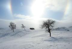 _MG_7454 (c0466art) Tags: 2015 chinese inner mogolia trip travel  grass land hill winter season snow world sunrise trees ice beautiful landscape scenery light canon 1dx c0466art