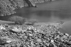 By the rocky shores... (EHA73) Tags: aposummicronm1250asph leica leicamm typ246 blackandwhite bw hatta hattadam dubai uae lake mountain rocks shore tree