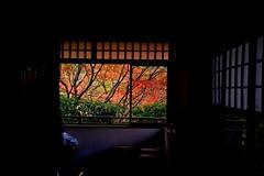 Autumn Window (tez-guitar) Tags: autumn autum 紅葉 autumn leaves tree trees wood forest garden pentax pentaxart temple kyoto architect