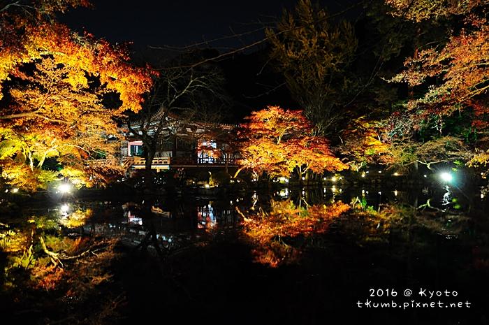 2016醍醐寺夜楓11.JPG