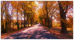 Along the Way... (dianealdrich - Please read my profile) Tags: autumnleaves autumn foliage autumnfoliage fallseason fall autumncolor season road country countryroad rural ruralscene ruralroad trees colorfultrees colorfulleaves newjersey nj southjersey southernnewjersey salemcounty