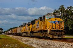 CSX K219 with UP power Bushnell, FL 10-27-16 (tarellsallie) Tags: unionpacific csx norfolksouthern canadiannational canadianpacific kansascitysouthern ns up cn cp kcs bnsf railroad railfanning railfan engine locomotive train trains trainspotting florida bushnell sumter sumtercounty canon canont3i october 2016 usa unitedstates america unitedstatesofamerica sd70m sd70mac sd70ace ac4400 cw44ac ac44cw es44ac es44dc