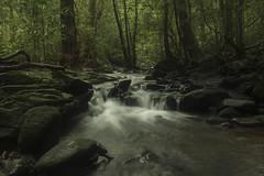 Nature's Best (varmarohit) Tags: landscape stream forest rainforest naturephotography nature naturephotograph wildlifephotography wilderness wildindia wildlife rohitvarma rohit