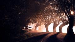 Emprise (Quentin D'hont) Tags: rêve dream cauchemar nightmare emprise hold horreur infini infinite noir dark ombre shadow forêt forest arbre tree creepy terreur terror lumière light canon 750d