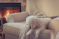 (David Youngblood) Tags: sal1650 a77ii ilca77m2 sony resting fireside nap pet maltipoo chair fireplace blanket dog