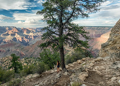 Switchback View (Kirk Lougheed) Tags: arizona grandcanyon grandcanyonnationalpark grandview grandviewpoint grandviewtrail southrim usa unitedstates landscape nationalpark outdoor path rim summer trail tree