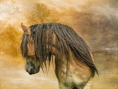No - do not take pictures of me! I don't have my hair done yet! (Freddy Juhl) Tags: equine csummerjunjulaug seasons animals field grass horse horses majestic mane nature outdoors photography ponies pony speed strength togethernes wildhorses wildlife rstider