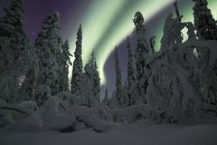 curtain of night (nils_P) Tags: green forest night sky stars aurora snow trees winter lappland nature