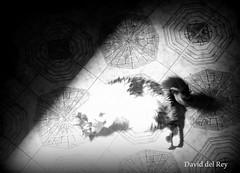 Un rayo de sol (David del Rey78) Tags: cat kitten pattern tiles floor suelo vintage ceramica azulejo antiguo gata gato gatita mascota ojosverdes catseyes vintagepattern dibujoceramica floortiles pet pets fluffy furry beautiful blackandwhite monochrome monochroma blancoynegro bn photograph fotografa