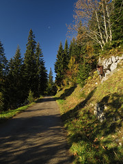 Autumn colors with the moon and a wayward cross (aniko e) Tags: autumn forest road hiking sonnwendjoch austria sterreich mountains cross trees colors leaves mangfallgebirge bayerischevoralpen bavarianprealps tirol tyrol
