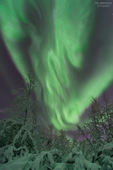 Like a flame (AngryTheInch42) Tags: aurora auroraborealis space astrophotography snow winter arctic kiruna sweden stars