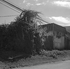 Tapping In (geowelch) Tags: thejunction toronto industrialarchitecture commercialbuildings blackandwhite newtopographics urbanfragments urbanlandscape 120 film 6x6 mediumformat kodakportra400bw c41 epsonperfection4870photo yashicamat