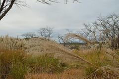 Don't look (kzmiz) Tags: nikond800e japan saitama hikigun namegawamachi yamada musashi shinrin koen park