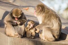 2016-11-27-14h22m25.BL7R5397 (A.J. Haverkamp) Tags: canonef100400mmf4556lisiiusmlens amsterdam noordholland netherlands zoo dierentuin httpwwwartisnl artis thenetherlands japansemakaak japanesemacaque dob09062016 pobamsterdamthenetherlands nl