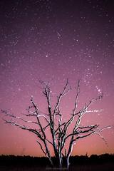 Endless (Mbakker81) Tags: longexposure 50mm natuur tree veluwe nature stars sky harderwijk 2016 night ngc canon