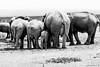Belles lunes. (Nona P.) Tags: safari afriquedusud wildlife girafe éléphant sauvage brousse animal canon photography nonap
