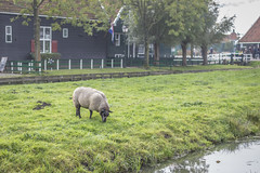 IMG_9560 (digitalarch) Tags: netherlands zaanse schans zaanseschans