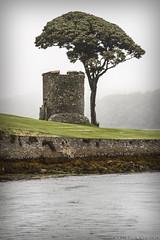 Strangford Tower (dareangel_2000) Tags: old tree tower castle history marina landscape ruins harbour lookout manmade historical northernireland strangford strangfordlough codown number42 dariacasement strangfordtower
