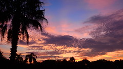 Bradenton's Sunday Sunrise (Jim Mullhaupt) Tags: morning pink blue red wallpaper sky orange sun color tree weather silhouette yellow clouds sunrise landscape dawn nikon flickr florida palm exotic p900 tropical coolpix bradenton sunup mullhaupt cloudsstormssunsetssunrises nikoncoolpixp900 coolpixp900 nikonp900 jimmullhaupt