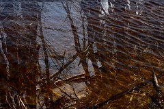 Rippling water and dead timber (jack eastlake) Tags: park beach rocks lagoon national middle mimosa