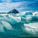 挪威北極熊_5d3_20150801-196.jpg