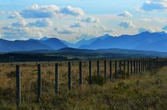 Fenced Landscape (Bracus Triticum) Tags: summer canada landscape august alberta fenced 8月 2015 カナダ hachigatsu 八月 hazuki 葉月 アルバータ州 leafmonth 平成27年