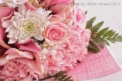 IMG_0994 (IbtiHAlinO) Tags: 1855mm   flowersw    canon600d