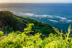 around Oahu (Edi Bhler) Tags: sea plant nature meer natur pflanze waters leuchtturm wellen gewsser nikond810 24120mmf4 2015hawaii oahulm wavebrandungsurge