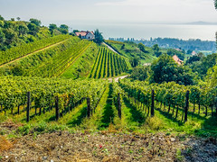 Wine garden @ balaton (gefeddert) Tags: lake hungary wine grape balaton iphone drinkingwine inthemountain winegarden balatonlake iphone6plus