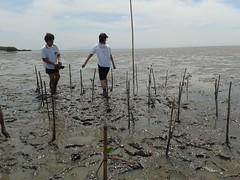 10.12.2015-AngloSingapore-BangPu-100 trees (27) (pattfoundation2014) Tags: thailand education mangrove treeplanting bangpu pattfoundation anglosingapore