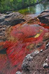 Cao Cristales - The most beautiful river in the world (Pedro Pablo Orozco) Tags: color ro colombia meta colores bello lamacarena macareniaclavigera elromsbellodelmundo