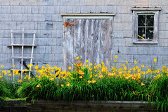 Maritime Scene (craig_schenk) Tags: contrasts travel wall yellow detail old new flower flowers