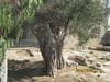 IMG_1772 (richard_munden) Tags: cyprus kolossi archaeologicalsite