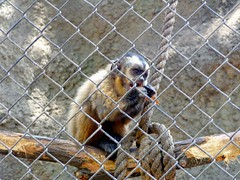 Zoolgico - Santiago, Chile. (marcelaale97) Tags: chile santiago mono zoolgico comiendo