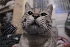 Miao! (IlGiomba) Tags: cats fusa gattini animalidacompagnia